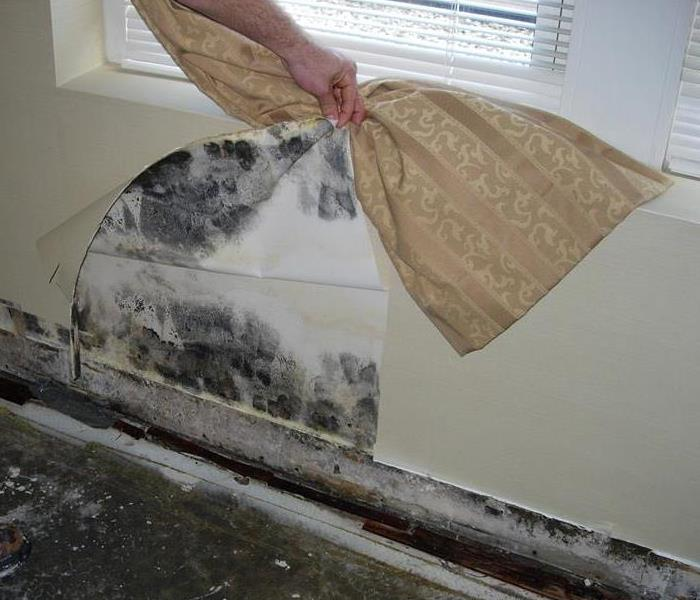 Mold Remediation So you sent the remediation company home early