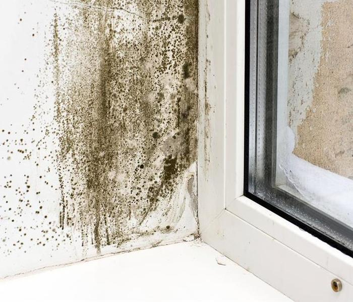 Mold Remediation GOT MOLD???? LET US KNOW
